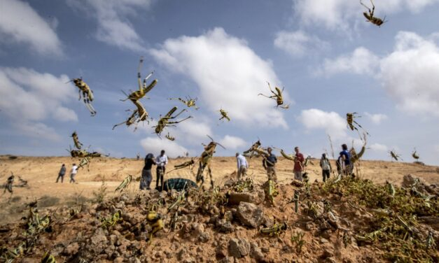 Locust plague reaches coronavirus-hit China after wreaking havoc across Africa